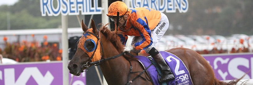 Rosehill Racing Tips Saturday August 8th
