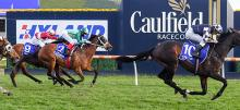 Caulfield Racing Tips 2020 Caulfield Guineas Day