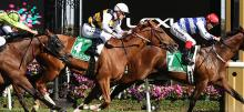 Flemington Racing Tips 2020 Turnbull Stakes Day