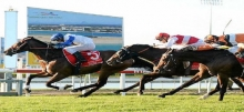 Sunshine Coast Racing: Guineas Plate Preview & Betting Tips