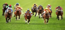 Betting Strategy: Laying the Field - Optimal Conditions