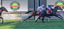 Australian Horse Racing Tips Friday February 12th